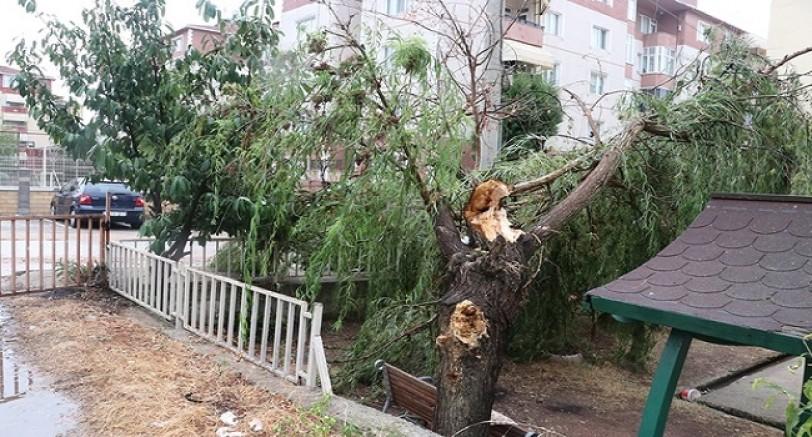 Kuvvetli Rüzgar Ağaçları Devirdi