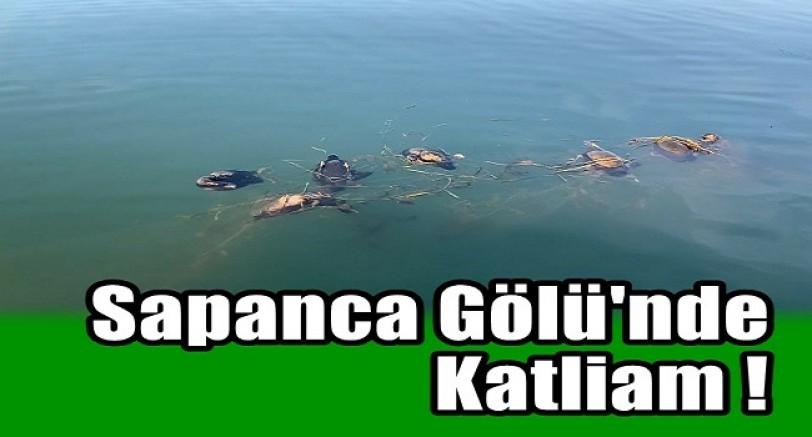 Sapanca Gölü'nde Katliam