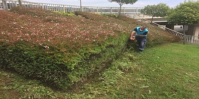 Yeşil Alanlara Sonbahar Bakımı